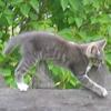 котенок на заборе с зелеными листьями