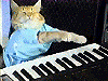 keyboard cat is ready