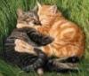 Кошачьи брачные объявления