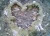 pearlstreetdiva userpic