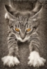 marlock [userpic]
