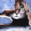 siriala: Cat by freepostage