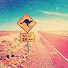 дорога с кенгурями