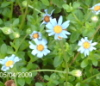 mina1130 userpic
