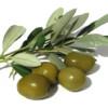 olivamaslina userpic