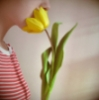 Наталя: tulip