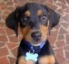 sipdog userpic
