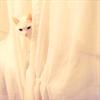 lotos79: white kitty