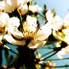 kaori_midori userpic