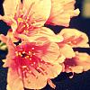 taiikakun userpic