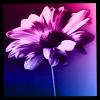 seranita userpic