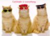 tramcat userpic