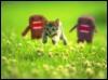 love_kitty390 userpic