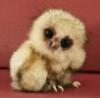 lolwut, owl