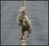 Diane: dancing sheep!