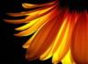 alisonsdream userpic