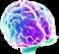 orgasm, brain