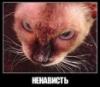 vladimir_veicel