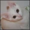 catsushi userpic