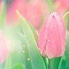lavender_sky1