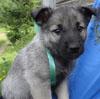 Gunnar as a pup!