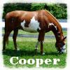 cooper eating