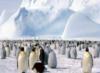 pingvinoffa