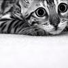 cat: big eyes