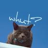 Wendi-chan ~ ♥Koya's Kitty♥~: SMOKEY => whut