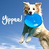 Little Australian Bundle Of Delightful Joy: yippee