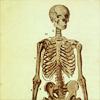 skeleton;