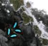 de_deugniet: ouran