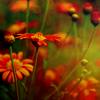 AutumnVerse: Flower 3