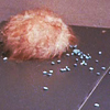 a_tribble userpic