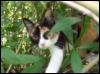 katyacat userpic