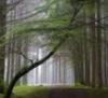 gb_trees