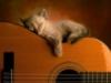 desertedskies: Ryo+Teddy