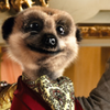 comparemeerkats userpic