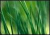 greenicle userpic