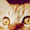 mali_marie: stock_cat