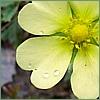 cocoajunkie userpic