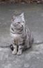 стамбульский кот