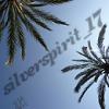 silverspirit_17 userpic