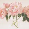 velvet_bouquet userpic