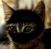 j_ninjacat userpic
