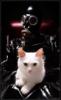 industrial cat