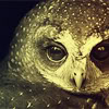 owl quiet on the western front