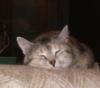 Willow Pillow
