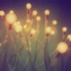 phantasm | glimmergrass