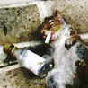 greysquirrel userpic